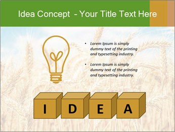 Gold wheat PowerPoint Templates - Slide 80