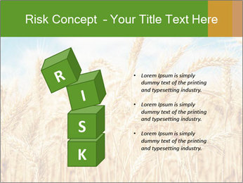Gold wheat PowerPoint Templates - Slide 81
