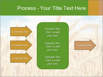 Gold wheat PowerPoint Templates - Slide 85