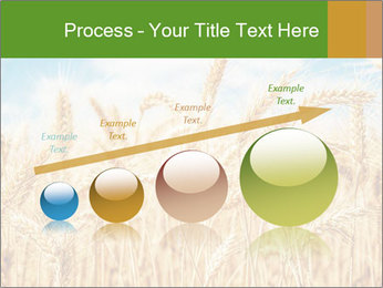 Gold wheat PowerPoint Templates - Slide 87
