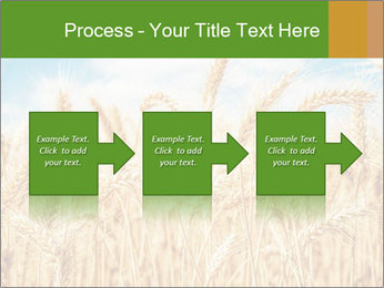 Gold wheat PowerPoint Templates - Slide 88
