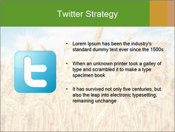Gold wheat PowerPoint Templates - Slide 9