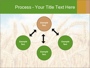 Gold wheat PowerPoint Templates - Slide 91