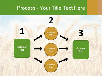 Gold wheat PowerPoint Templates - Slide 92