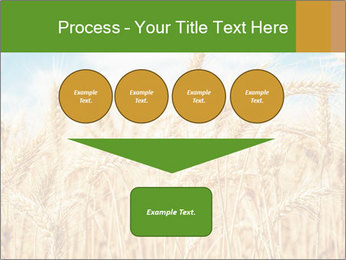 Gold wheat PowerPoint Templates - Slide 93