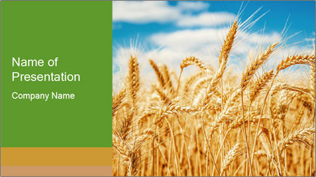 Gold wheat PowerPoint Template