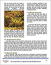 0000093502 Word Template - Page 4