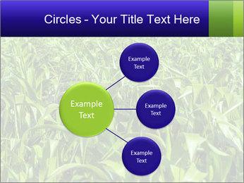 0000093722 PowerPoint Templates - Slide 79