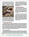 0000093730 Word Templates - Page 4