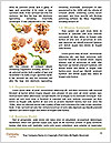 0000093734 Word Templates - Page 4