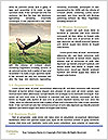 0000093838 Word Template - Page 4