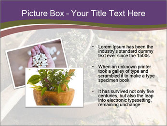 Dried chamomile flowers PowerPoint Templates - Slide 20