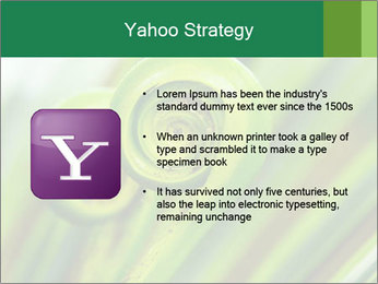The green fern origin PowerPoint Templates - Slide 11
