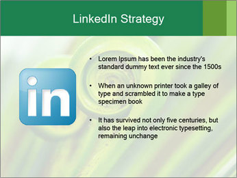 The green fern origin PowerPoint Templates - Slide 12