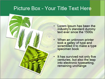 The green fern origin PowerPoint Templates - Slide 17