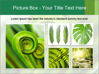The green fern origin PowerPoint Templates - Slide 19