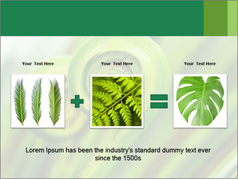 The green fern origin PowerPoint Templates - Slide 22