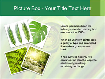 The green fern origin PowerPoint Templates - Slide 23