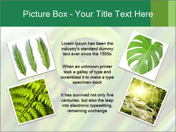 The green fern origin PowerPoint Templates - Slide 24