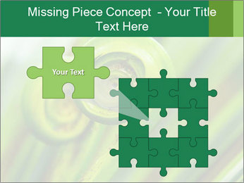 The green fern origin PowerPoint Templates - Slide 45