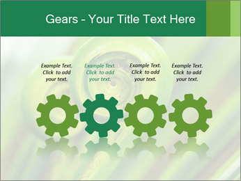 The green fern origin PowerPoint Templates - Slide 48