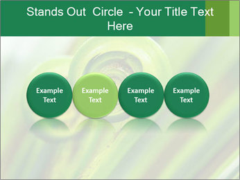 The green fern origin PowerPoint Templates - Slide 76