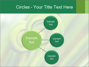 The green fern origin PowerPoint Templates - Slide 79