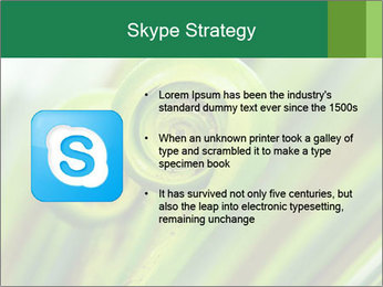 The green fern origin PowerPoint Templates - Slide 8