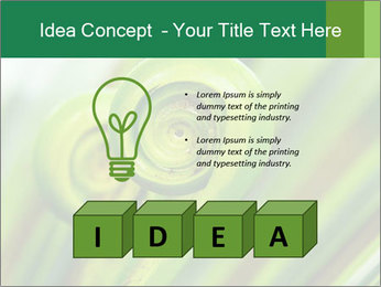 The green fern origin PowerPoint Templates - Slide 80