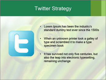 The green fern origin PowerPoint Templates - Slide 9