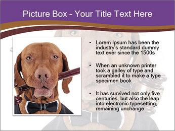 Golden color pure breed vizsla dog PowerPoint Template - Slide 13
