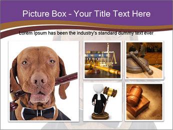 Golden color pure breed vizsla dog PowerPoint Template - Slide 19