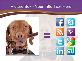 Golden color pure breed vizsla dog PowerPoint Template - Slide 21