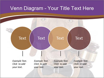 Golden color pure breed vizsla dog PowerPoint Template - Slide 32