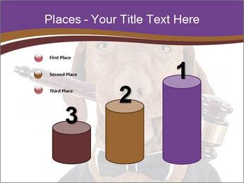 Golden color pure breed vizsla dog PowerPoint Template - Slide 65