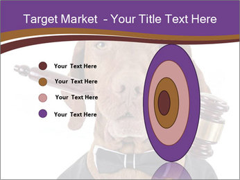 Golden color pure breed vizsla dog PowerPoint Template - Slide 84