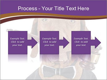 Golden color pure breed vizsla dog PowerPoint Template - Slide 88