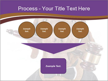Golden color pure breed vizsla dog PowerPoint Template - Slide 93