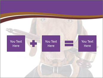 Golden color pure breed vizsla dog PowerPoint Template - Slide 95