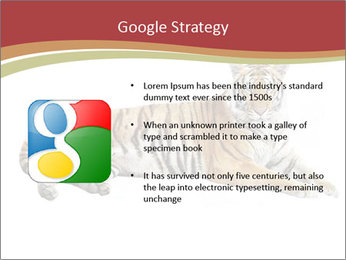Tiger PowerPoint Template - Slide 10