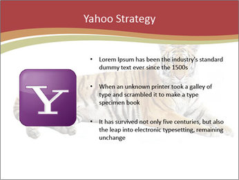 Tiger PowerPoint Template - Slide 11