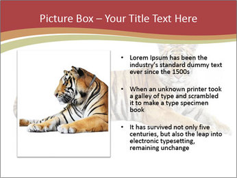 Tiger PowerPoint Template - Slide 13