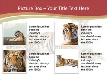 Tiger PowerPoint Templates - Slide 14