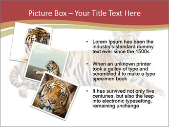 Tiger PowerPoint Template - Slide 17