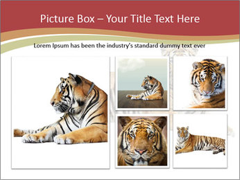 Tiger PowerPoint Templates - Slide 19
