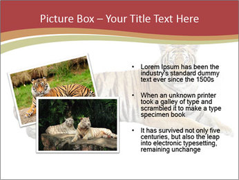 Tiger PowerPoint Templates - Slide 20