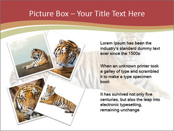 Tiger PowerPoint Templates - Slide 23