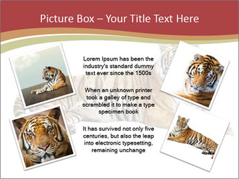 Tiger PowerPoint Templates - Slide 24