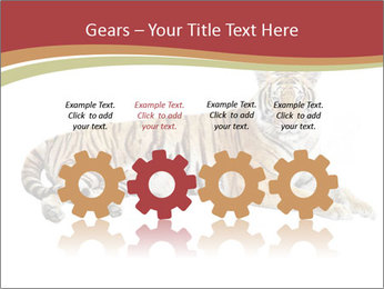 Tiger PowerPoint Templates - Slide 48