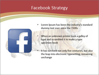 Tiger PowerPoint Templates - Slide 6